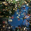 Autumn Puddle Reflections#08 by linmarie