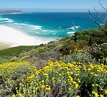 Spring Flowers Cape Town by Neil  Bradfield