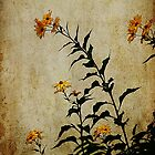 autumn daisies by janetlee