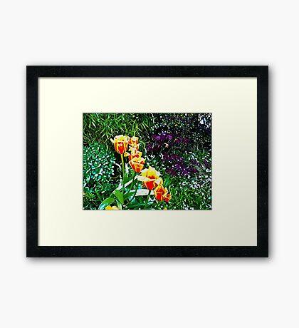 Floral rainbow  Framed Print