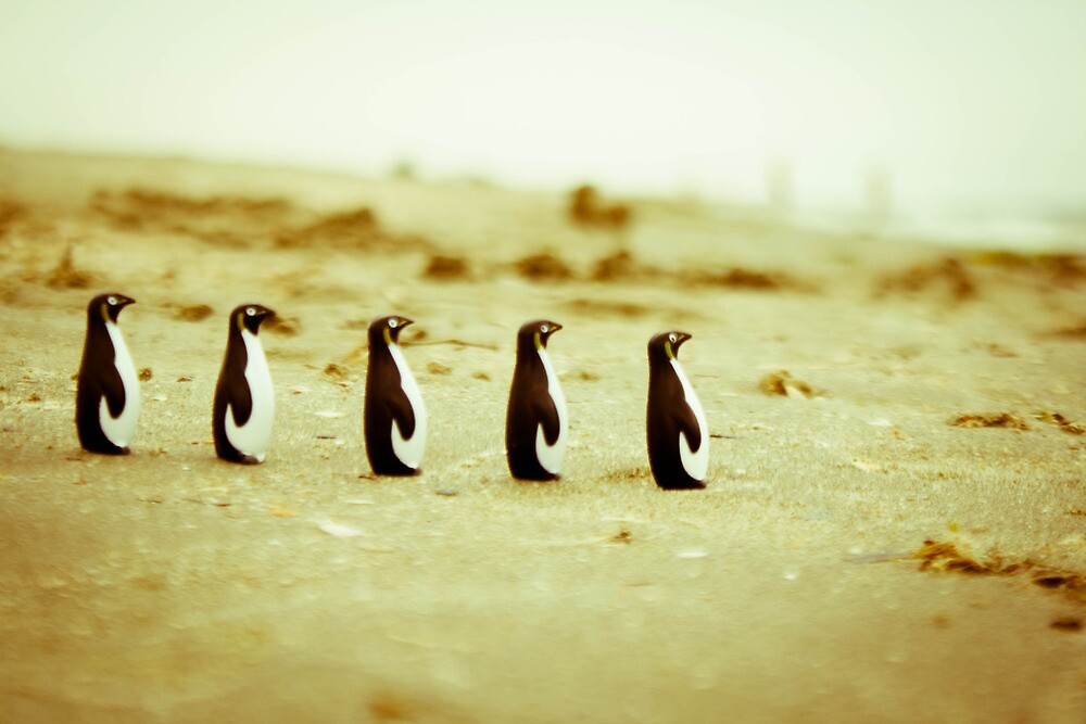 Penguins marching on the sand by iulix