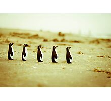 Penguins marching on the sand Photographic Print