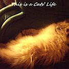 A Cats Life by trisha22