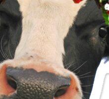 Flower Crown Cow Sticker