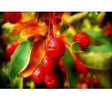 Cherry Berry ©  Photographic Print