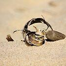 Beach Art by Carrie Bonham