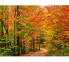 The Reds of Autumn Photographic Print