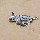 flatback turtle catchling by Heinz