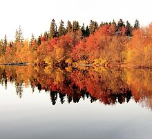 Red trees reflection in mirror lake by Ingvar Bjork Photography