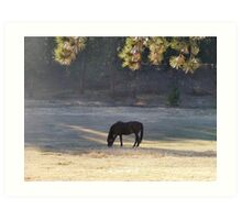 Equine Tranquility Art Print