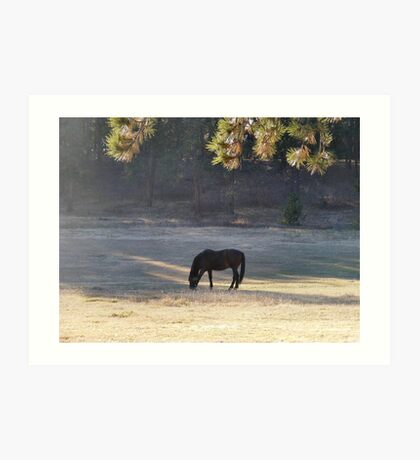 Equine Tranquility Art Print