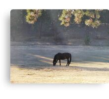 Equine Tranquility Metal Print