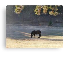 Equine Tranquility Canvas Print