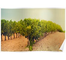 Vineyard Field in Southern France Poster