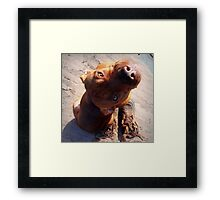 Constant Companion Framed Print