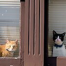 How Much Is That Pussy In The Window? by sedge808