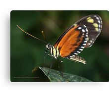 I am Butterfly Canvas Print