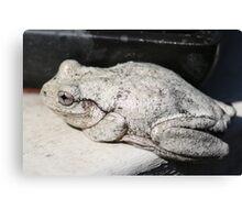 Peron's Tree Frog Canvas Print
