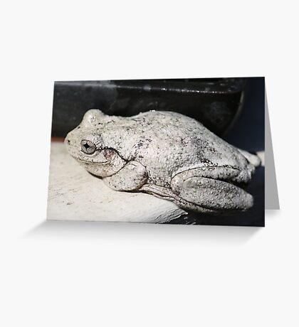 Peron's Tree Frog Greeting Card