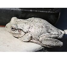 Peron's Tree Frog Photographic Print
