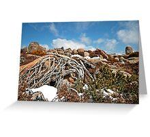 Mt Wellington Tree Roots  Greeting Card