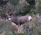 The BIG Buck by Arla M. Ruggles