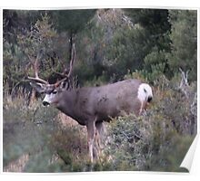 The BIG Buck Poster
