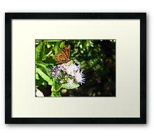 Butterfly ~ Fatal Metalmark Framed Print