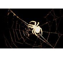 Creepy Spider Photographic Print