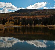 Beaver Pond by Sally Winter