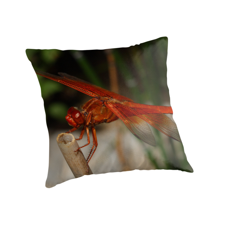 Flame skimmer dragonfly by Bluecornstudios
