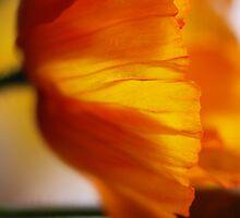 Yellow Poppy by Janet Leadbeater