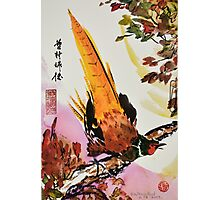 Chinese Pheasant on Branch Photographic Print