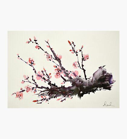 Blossom II Photographic Print