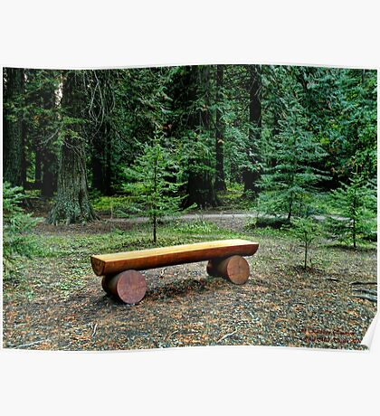 Forest Bench Poster