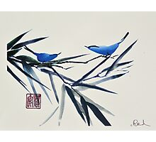 Blue Birds on Branch Photographic Print
