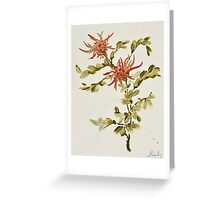 Spider Mums Greeting Card