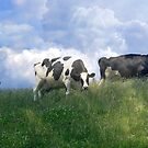 Cow Dreams by Tibby Steedly