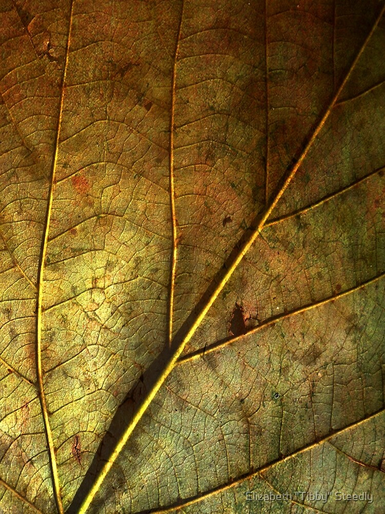 Leaf Pathways by Tibby Steedly
