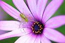 Daisy & Friend by Renee Hubbard Fine Art Photography