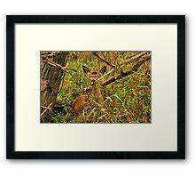 See You Deer Framed Print