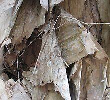 paperbark by melforrest