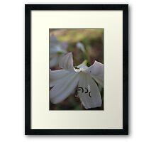 White lily and tiny grasshopper Framed Print