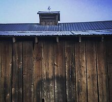 Rustic side of barn with tin roof by JULIENICOLEWEBB
