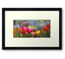 Plethora Of Poppies Framed Print