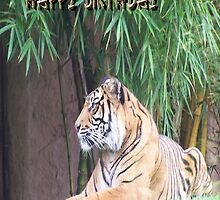 Tiger - Birthday Card by judygal