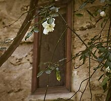 Garden Window, Lecce, IT by Rene Hales