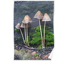 Group of Toadstools Poster