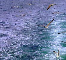 A flock of Seagulls! by Rusty  Gladdish