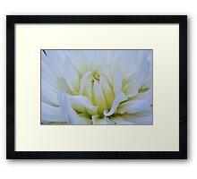 October  Flower  Framed Print